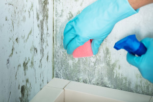 Pittsburgh Fast-Track Mold Removal